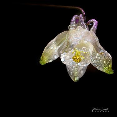 fleur_de_verre_FLP3252_30x30cm