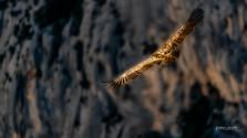 vautours_2019_FLP8664_45x80cm.jpg