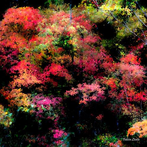 automne_FLP9071