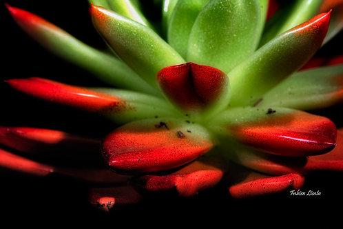 plante-grasse_FLP9569