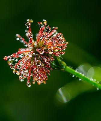 botaniques-2021_FLP5808.jpg