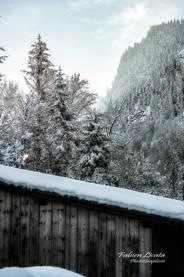 neige_FLP8600.jpg