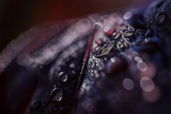 fabien-licata_perles-d'eau_FL04015