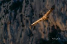 vautours_2019_FLP8664.jpg