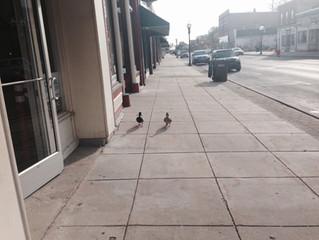 Dave's Ducks