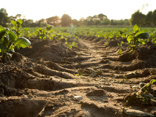 Restoring Our Relationship With Food and Soil