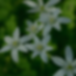 Star of Bethlehem.png