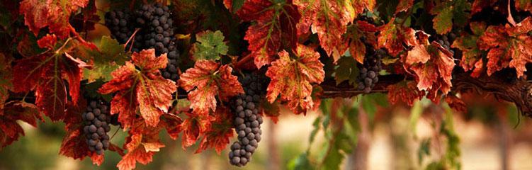 Clarksburg Wine Country