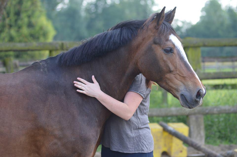 Consultation ostéopathique cheval