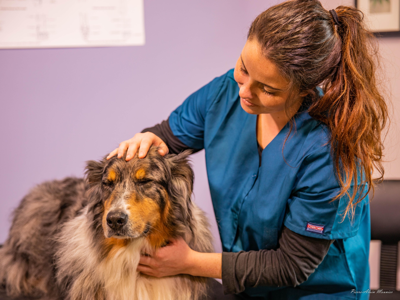 Consultation ostéopathique sur un chien