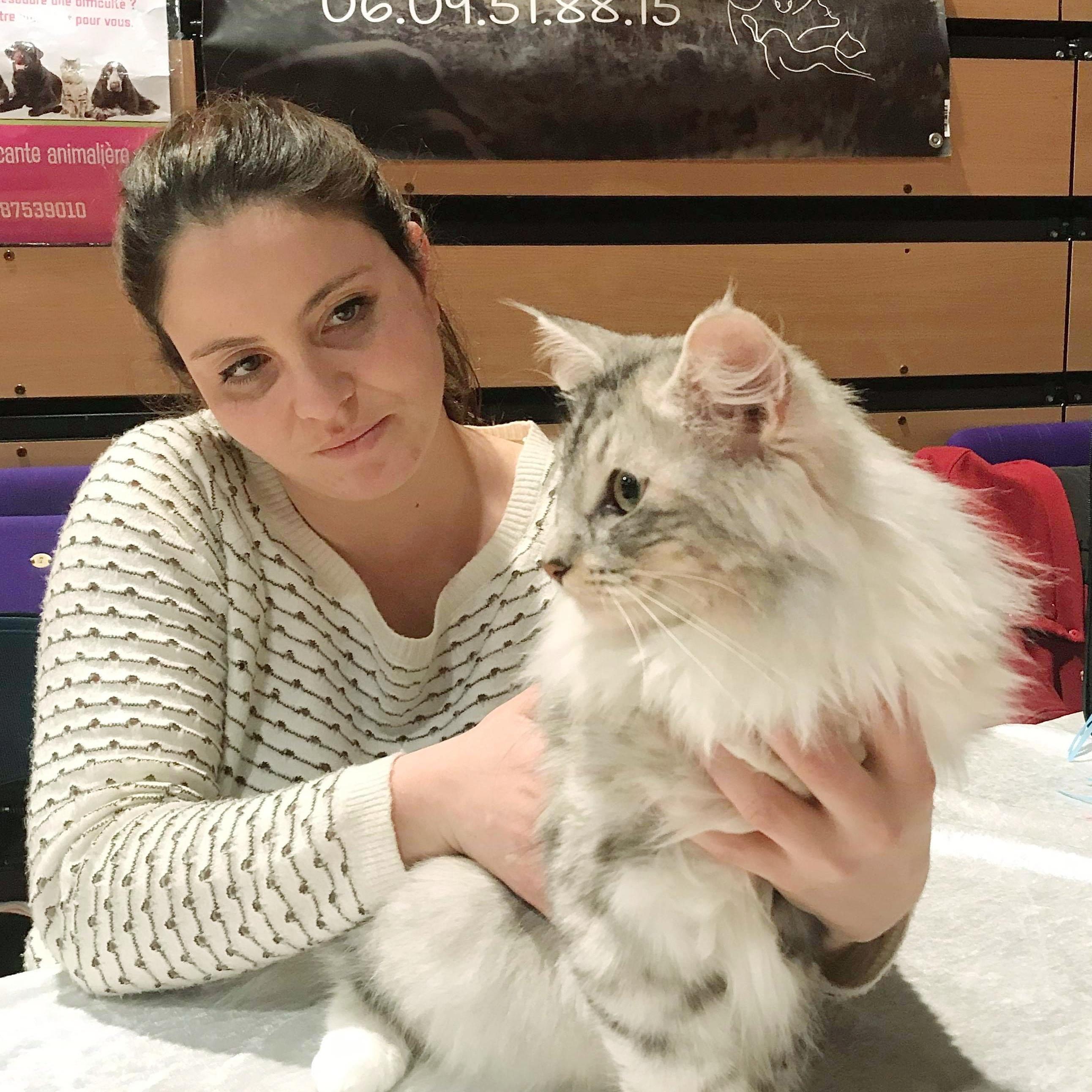 Consultation ostéopathique chat