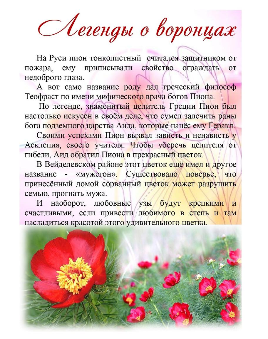 Пион тонколистный — вид из Красной книги России