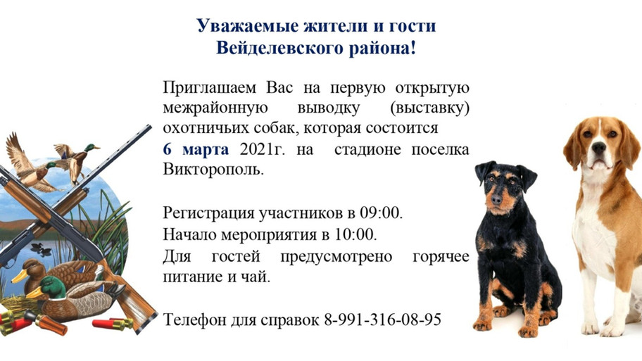 Выводка охотничьих собак