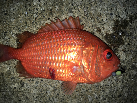 この魚の正体は?
