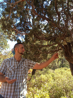 feel trees セドナの木と繋がるトッド