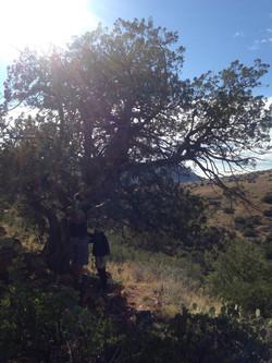 TREE TALK SPIRITUAL HIKING TOUR