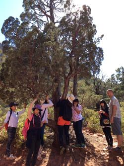 木を感じるスピリチュアル・ハイキングツアー