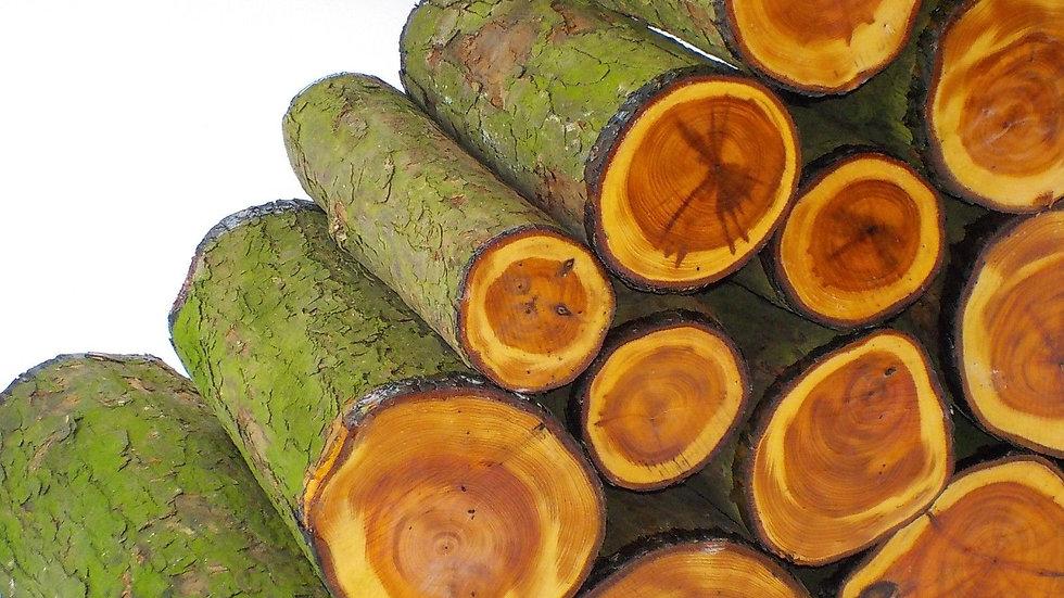 English Yew Woodturning Log Blanks