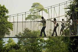 130207153459-ghana-tourism-canopy-walk.j