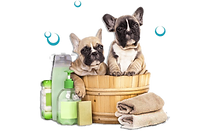 french-bulldog-dog-grooming-pet-puppy-ca