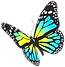 png-transparent-multicolored-butterfly-l