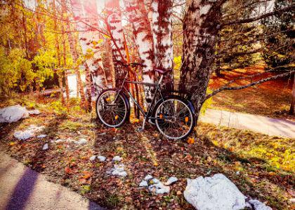 Postcard #2, Bicycle