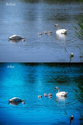 Swans Helsinki