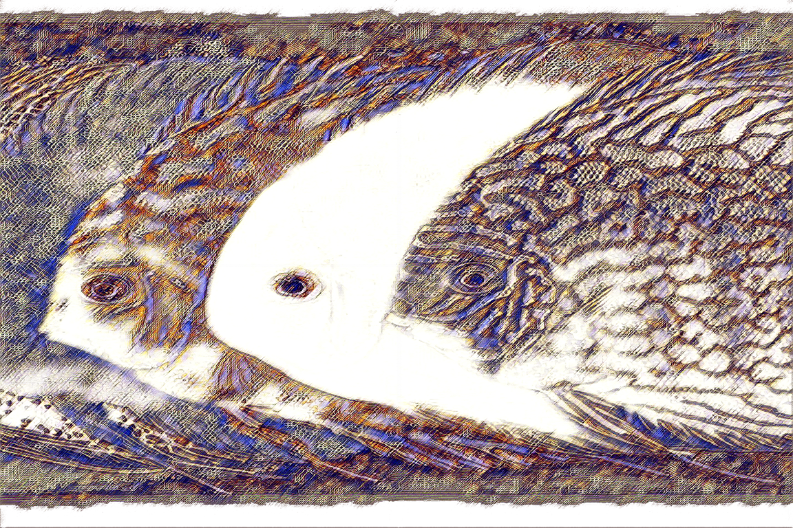fish8_12x8