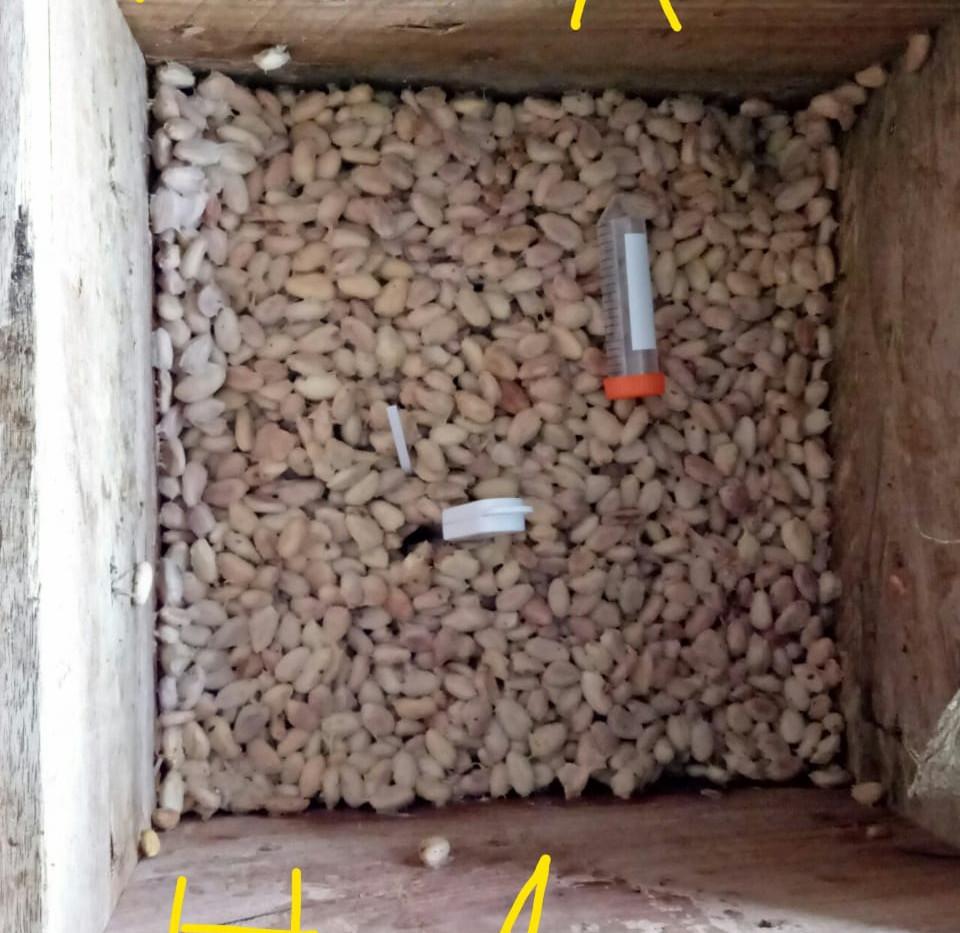 proses fermentasi dengan LIPI.jpeg