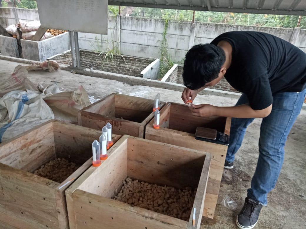 Pelatihan fermentasi kakao LIPI.jpeg