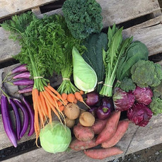 Part of a weekly CSA Share