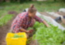 Creekside-Farm_Harvest.jpg