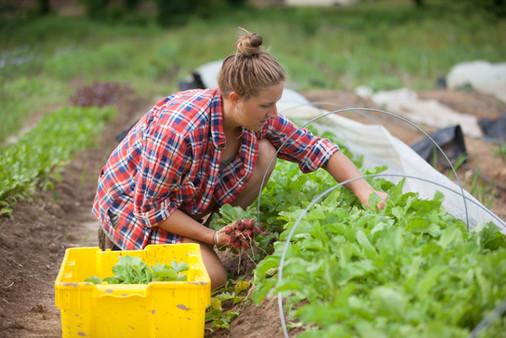 Organic farming is a labor of love.