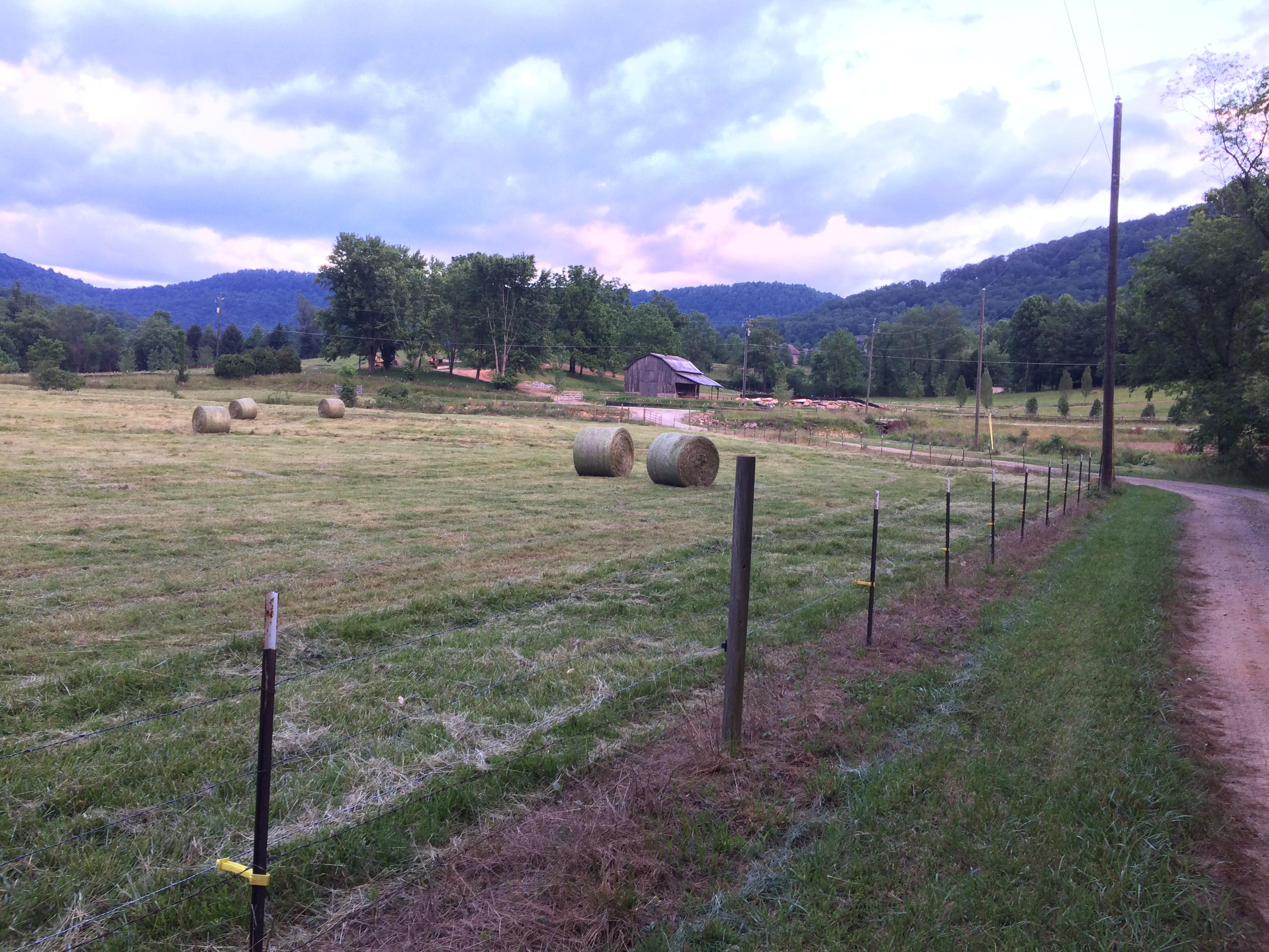 Hay bales June 10