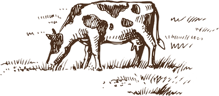 Cows hand drawn 2.png