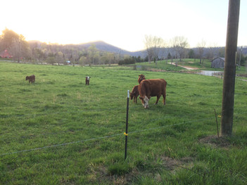 Lower pasture at sunset