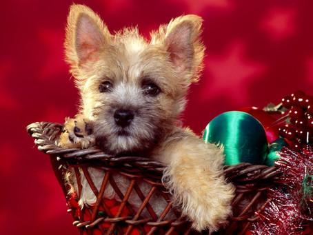 Mama! Quiero que los Reyes Magos me traigan un perro!