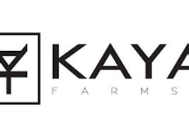 Chilled Cherries ( Sunset Sherbert x Cherry Cookies BX1)- Kaya Farms SMALLS