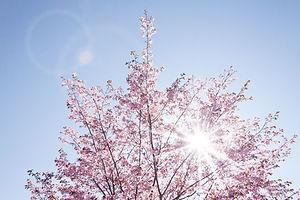 spring-733507_1920.jpg