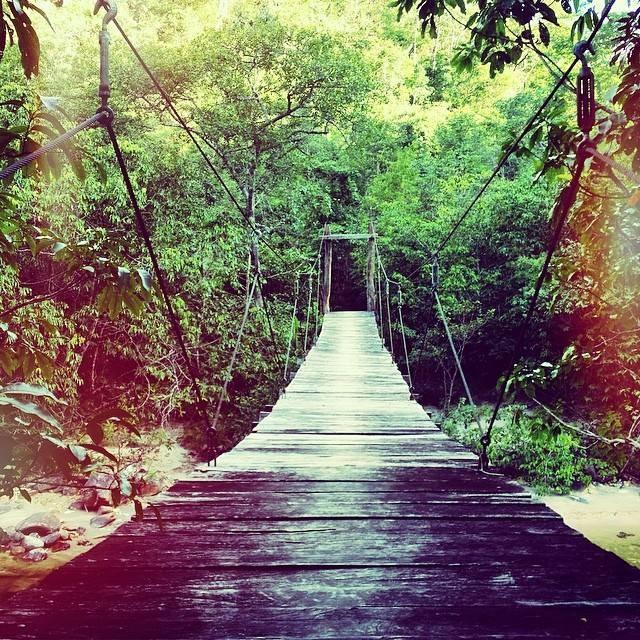 a ponte para ser livre