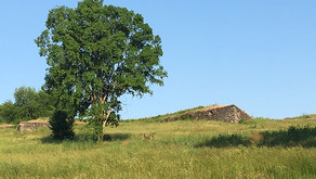 Fort Negley News