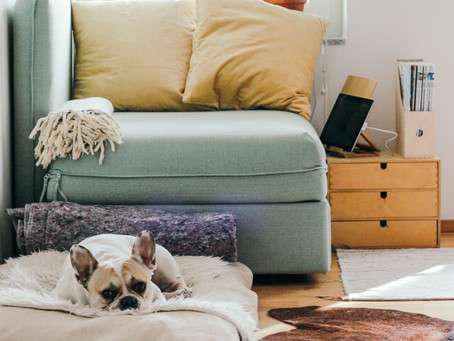 Renting with Pets - a Guide for Landlords