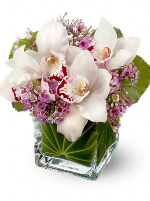 Orchid Dream