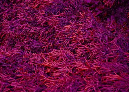 Texture Rose - Alicia Pouplin