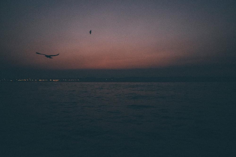 un oiseau vol au dessus de la mer à l'aube sur un ciel pourpre