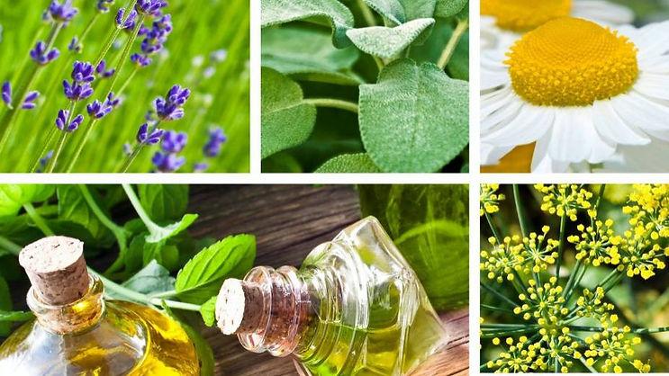 herbs-for-alt-med-16x9.jpg