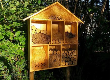 В Кузьминках откроют «отели» для пчел и жуков