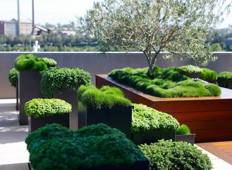 Озеленение не по шаблону. Новый подход к учету деревьев на крышах