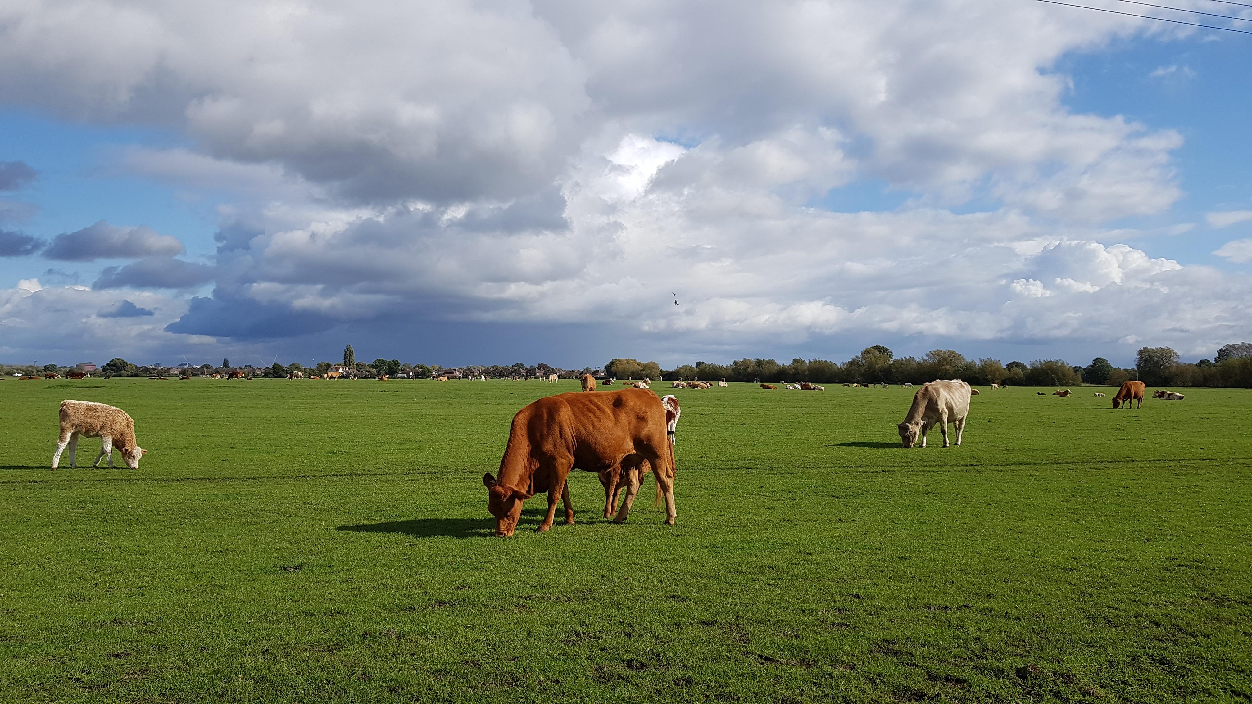 View across the common