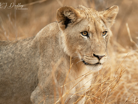 The principles of ethical wildlife photography